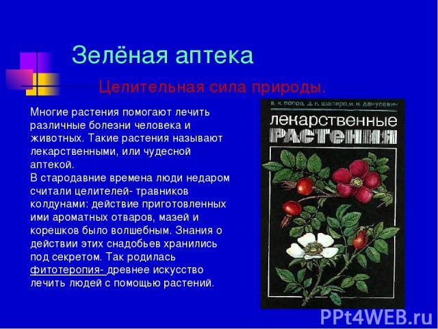 Зелёная аптека Целительная сила природы. Многие растения помогают лечить различные болезни человека и животных. Такие растения называют лекарственными, или чудесной аптекой. В стародавние времена люди недаром считали целителей- травников колдунами: …