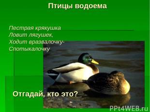 Птицы водоема Отгадай, кто это? Пестрая крякушка Ловит лягушек, Ходит вразвалочк