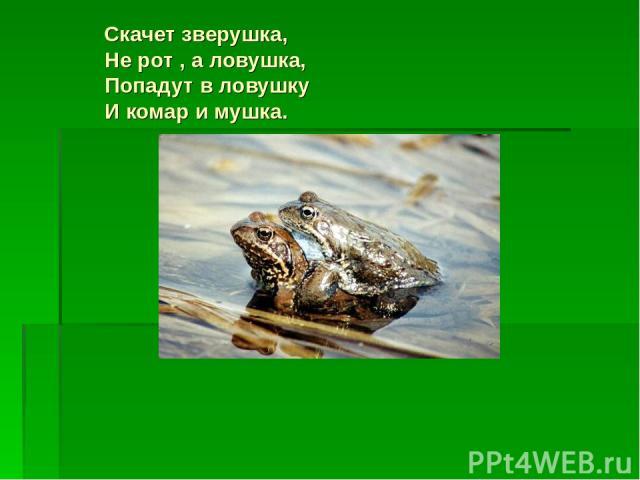 Скачет зверушка, Не рот , а ловушка, Попадут в ловушку И комар и мушка.