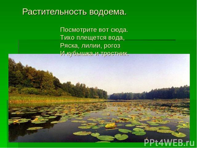 Растительность водоема. Посмотрите вот сюда. Тихо плещется вода, Ряска, лилии, рогоз И кубышка и тростник.
