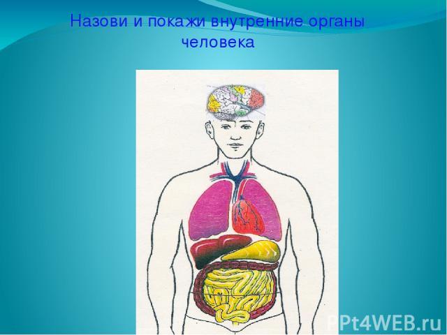 Назови и покажи внутренние органы человека