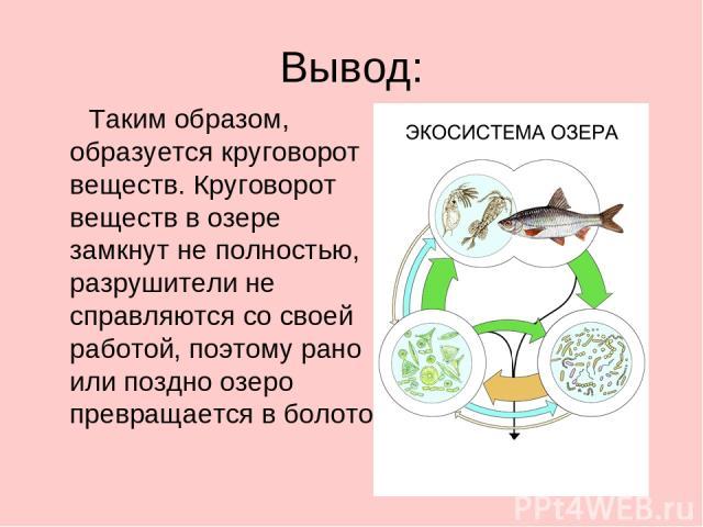 Вывод: Таким образом, образуется круговорот веществ. Круговорот веществ в озере замкнут не полностью, разрушители не справляются со своей работой, поэтому рано или поздно озеро превращается в болото.