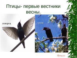 Птицы- первые вестники весны. грачи Начало скворец