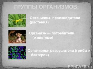 ГРУППЫ ОРГАНИЗМОВ: Организмы- производители (растения) Организмы- потребители (ж