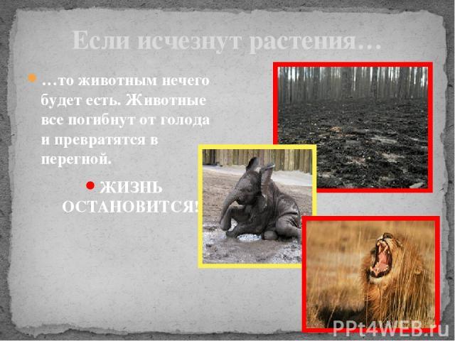 Если исчезнут растения… …то животным нечего будет есть. Животные все погибнут от голода и превратятся в перегной. ЖИЗНЬ ОСТАНОВИТСЯ!