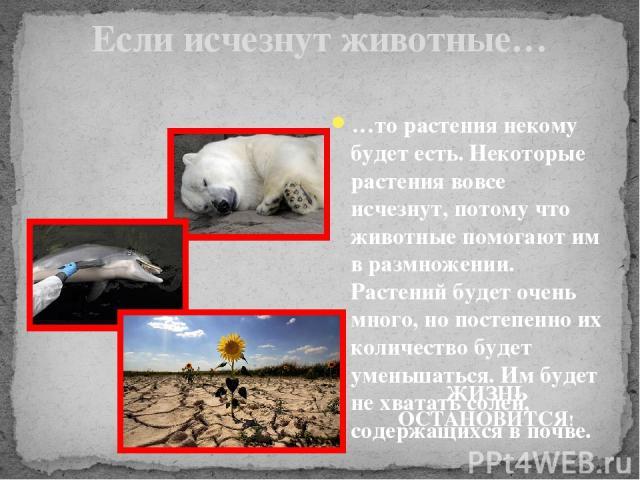 Если исчезнут животные… …то растения некому будет есть. Некоторые растения вовсе исчезнут, потому что животные помогают им в размножении. Растений будет очень много, но постепенно их количество будет уменьшаться. Им будет не хватать солей, содержащи…