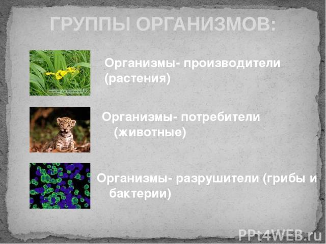 ГРУППЫ ОРГАНИЗМОВ: Организмы- производители (растения) Организмы- потребители (животные) Организмы- разрушители (грибы и бактерии)