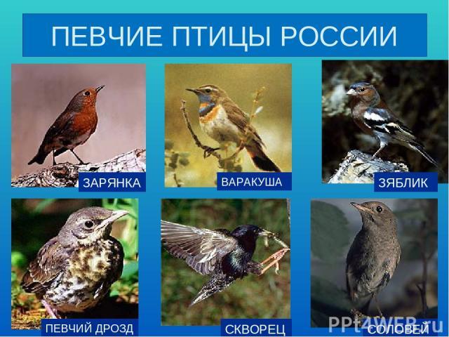 Фото и названия птиц