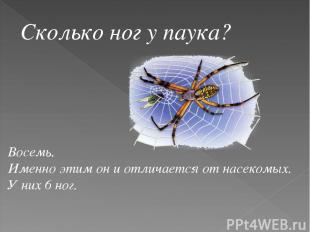 Сколько ног у паука? Восемь. Именно этим он и отличается от насекомых. У них 6 н