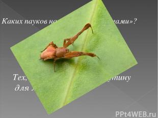Каких пауков называют «бродягами»? Тех, которые не ткут паутину для ловли добычи