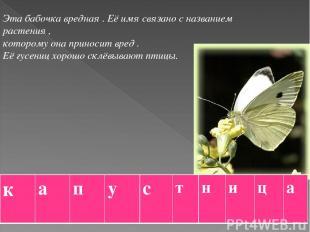 Эта бабочка вредная . Её имя связано с названием растения , которому она приноси
