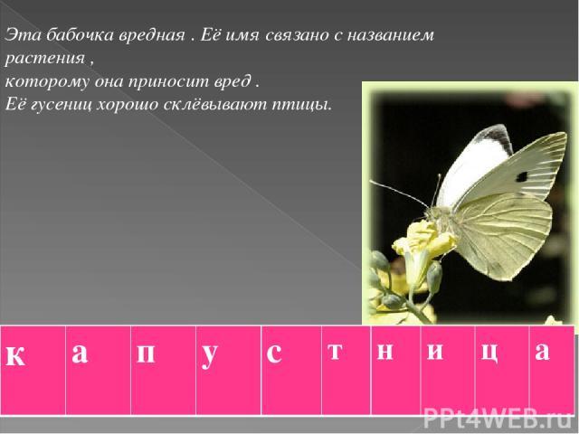 Эта бабочка вредная . Её имя связано с названием растения , которому она приносит вред . Её гусениц хорошо склёвывают птицы. к а п у с т н и ц а