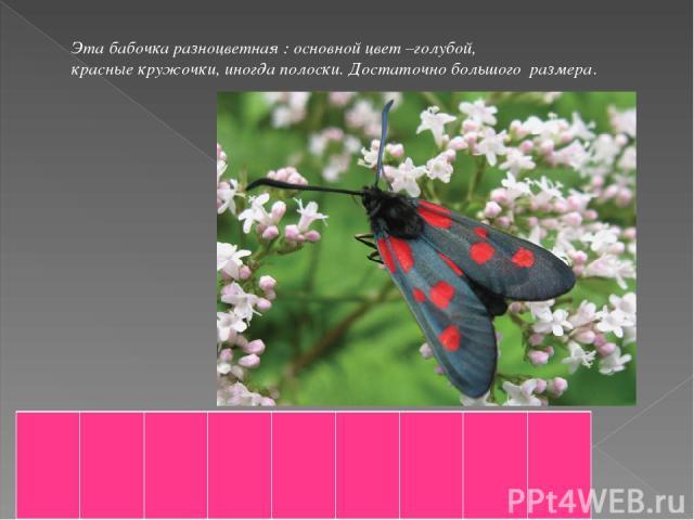 Эта бабочка разноцветная : основной цвет –голубой, красные кружочки, иногда полоски. Достаточно большого размера.