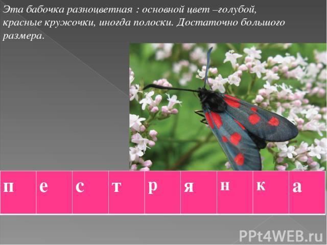Эта бабочка разноцветная : основной цвет –голубой, красные кружочки, иногда полоски. Достаточно большого размера. п е с т р я н к а