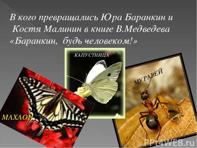 В кого превращались Юра Баранкин и Костя Малинин в книге В.Медведева «Баранкин, будь человеком!» МАХАОН КАПУСТНИЦА МУРАВЕЙ