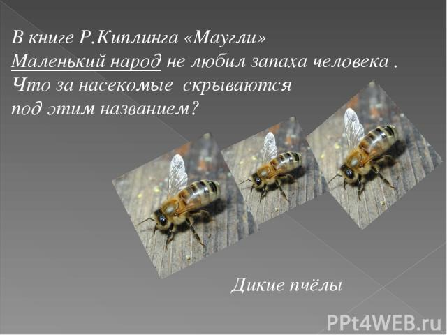 В книге Р.Киплинга «Маугли» Маленький народ не любил запаха человека . Что за насекомые скрываются под этим названием? Дикие пчёлы