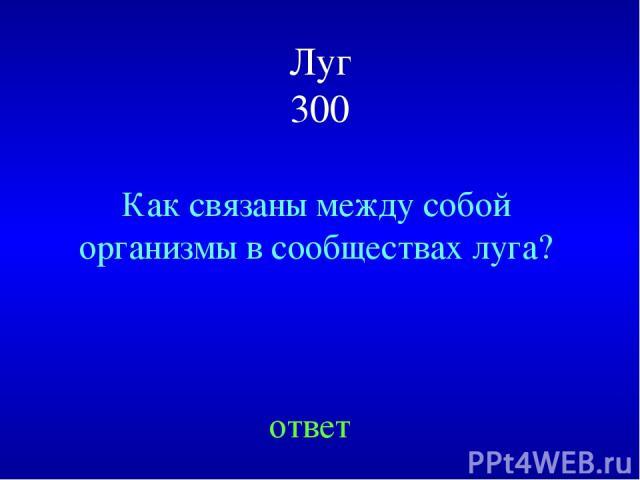 Луг 300 Как связаны между собой организмы в сообществах луга? ответ