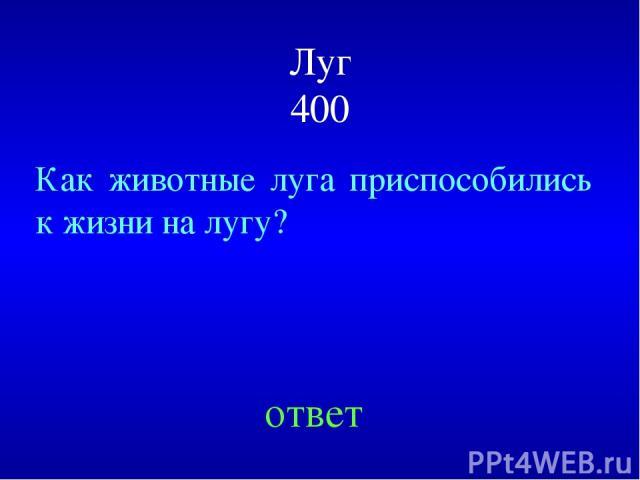 Луг 400 Как животные луга приспособились к жизни на лугу? ответ