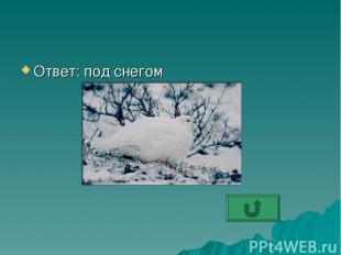 Ответ: под снегом