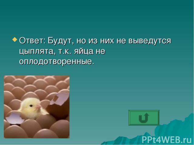 Ответ: Будут, но из них не выведутся цыплята, т.к. яйца не оплодотворенные.