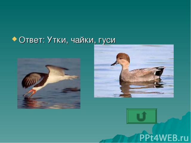 Ответ: Утки, чайки, гуси