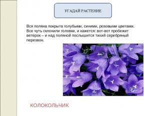 УГАДАЙ РАСТЕНИЕ Вся поляна покрыта голубыми, синими, розовыми цветами. Все чуть