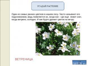 УГАДАЙ РАСТЕНИЕ Один из самых ранних цветков в нашем лесу. Часто называют его по