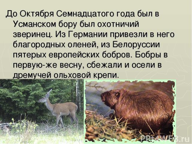 До Октября Семнадцатого года был в Усманском бору был охотничий зверинец. Из Германии привезли в него благородных оленей, из Белоруссии пятерых европейских бобров. Бобры в первую-же весну, сбежали и осели в дремучей ольховой крепи.