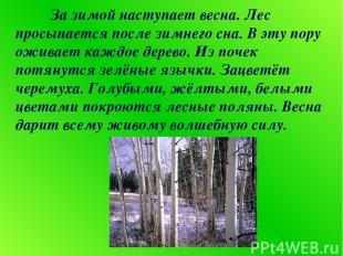 За зимой наступает весна. Лес просыпается после зимнего сна. В эту пору оживает