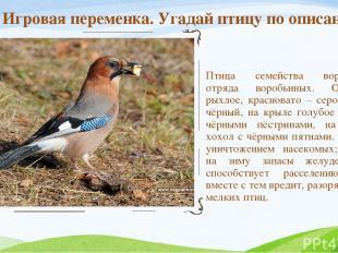 Птица семейства вороновых, отряда воробьиных. Оперение рыхлое, красновато – серо