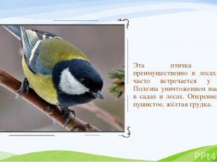 Эта птичка обитает преимущественно в лесах. Зимой часто встречается у жилья. Пол