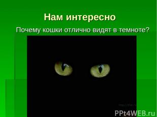 Нам интересно Почему кошки отлично видят в темноте?