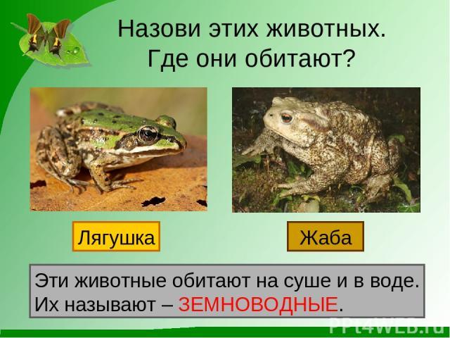 Назови этих животных. Где они обитают? Лягушка Жаба Эти животные обитают на суше и в воде. Их называют – ЗЕМНОВОДНЫЕ.