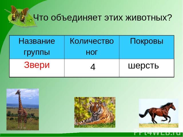 Что объединяет этих животных? 4 шерсть Название группы Количество ног Покровы Звери