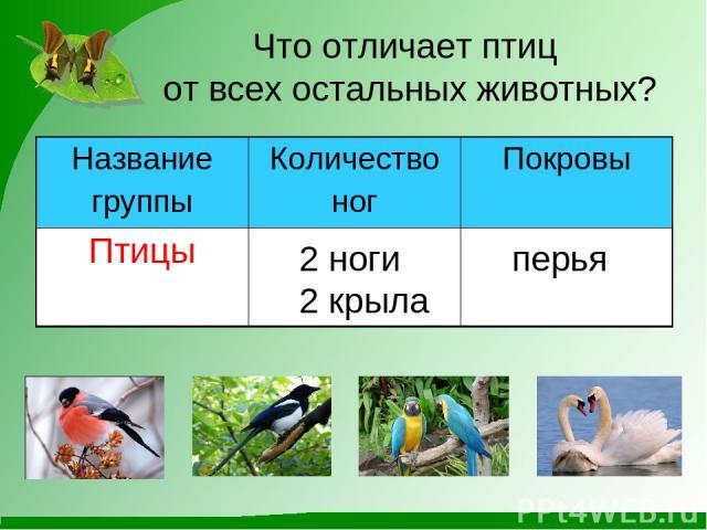 Что отличает птиц от всех остальных животных? 2 ноги 2 крыла перья Название группы Количество ног Покровы Птицы
