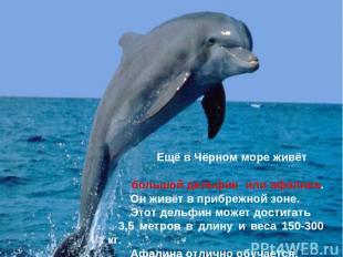 Ещё в Чёрном море живёт большой дельфин или афалина. Он живёт в прибрежной зоне.