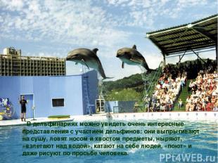 В дельфинариях можно увидеть очень интересные представления с участием дельфинов