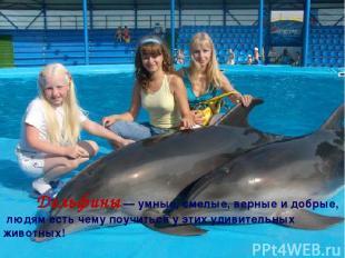 Дельфины — умные, смелые, верные и добрые, людям есть чему поучиться у этих удив