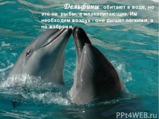 Дельфины обитают в воде, но это не рыбы, а млекопитающие. Им необходим воздух -
