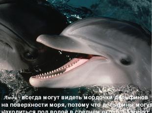 Люди всегда могут видеть мордочки дельфинов на поверхности моря, потому что дель
