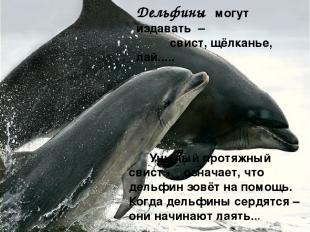 Дельфины могут издавать – свист, щёлканье, лай..... Унылый протяжный свист - озн