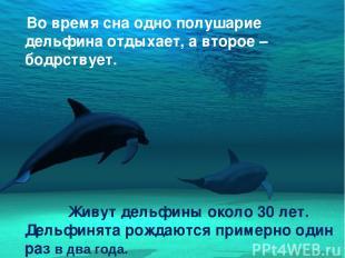 Во время сна одно полушарие дельфина отдыхает, а второе – бодрствует. Живут дель