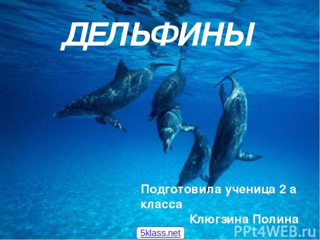 ДЕЛЬФИНЫ Подготовила ученица 2 а класса Клюгзина Полина 5klass.net