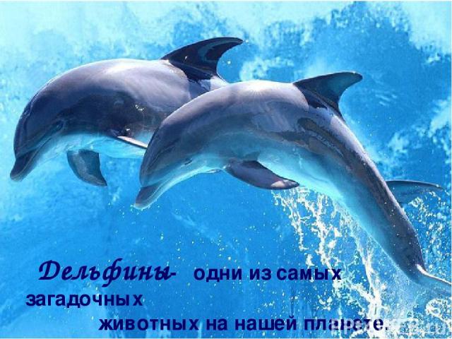 Дельфины- одни из самых загадочных животных на нашей планете.