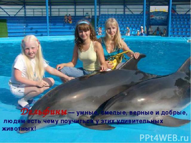 Дельфины — умные, смелые, верные и добрые, людям есть чему поучиться у этих удивительных животных!