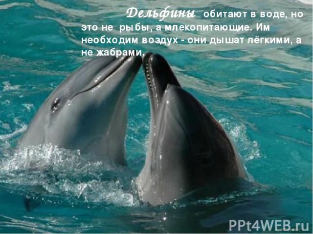 Дельфины обитают в воде, но это не рыбы, а млекопитающие. Им необходим воздух - они дышат лёгкими, а не жабрами.