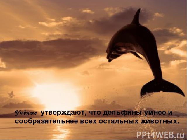Учёные утверждают, что дельфины умнее и сообразительнее всех остальных животных.