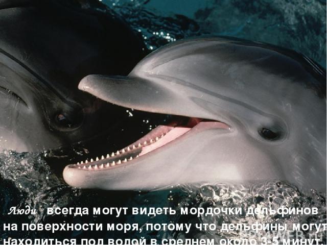 Люди всегда могут видеть мордочки дельфинов на поверхности моря, потому что дельфины могут находиться под водой в среднем около 3-5 минут.