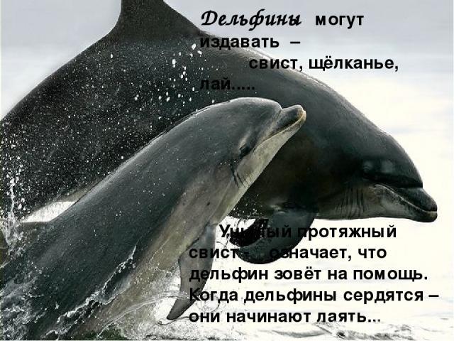 Дельфины могут издавать – свист, щёлканье, лай..... Унылый протяжный свист - означает, что дельфин зовёт на помощь. Когда дельфины сердятся – они начинают лаять...