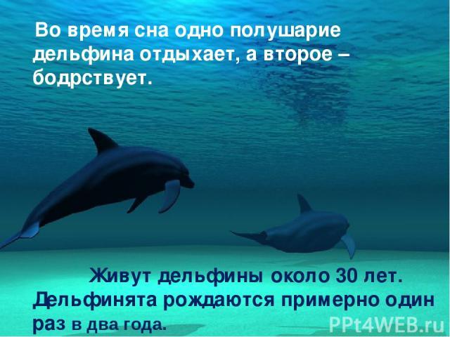 Во время сна одно полушарие дельфина отдыхает, а второе – бодрствует. Живут дельфины около 30 лет. Дельфинята рождаются примерно один раз в два года.